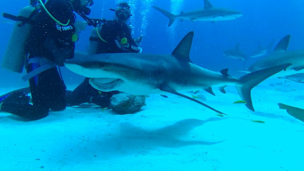 Shark Diving with Stuart Cove